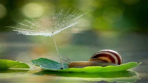 stunning nature maravilhosa natureza hd youtube