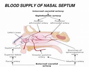 NASAL SEPTAL DISEASES