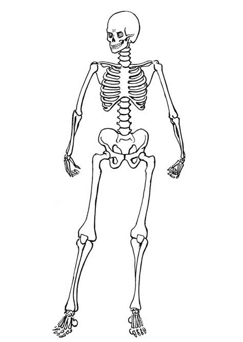 skeleton template free printable skeleton coloring pages for