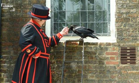 tower  london ravens  longer   fight  london
