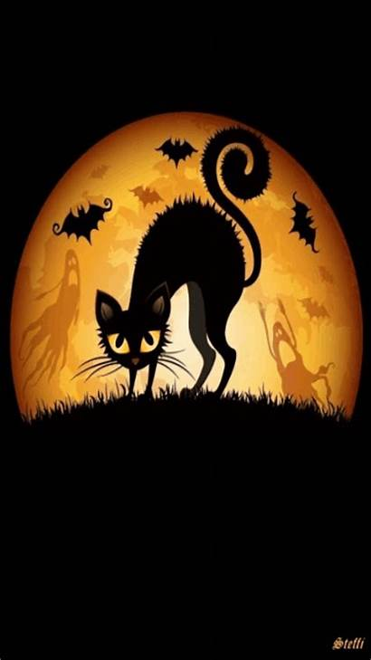 Halloween Happy Scared Cat Gifs Lovethispic Animated