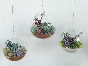 Terrarium Plante Deco : 17 best images about jardinage on pinterest coins planters and haus ~ Preciouscoupons.com Idées de Décoration