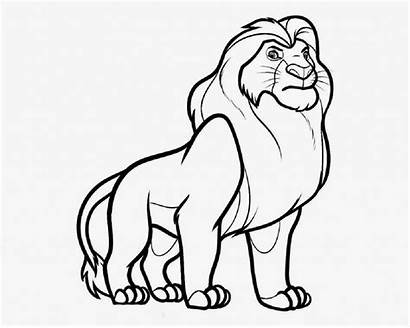 Cub Drawing Lion Easy Wolf Getdrawings