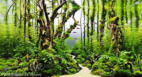 Aquascape Forest by The Nature Aquarium Style Aquascaping