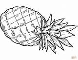 Coloring Pineapple Printable Paper Drawing sketch template