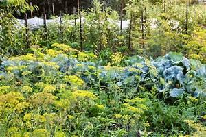 Mischkultur Im Garten : im permakulturgarten mischkulturen anlegen gute nachbarn und tipps ~ Orissabook.com Haus und Dekorationen