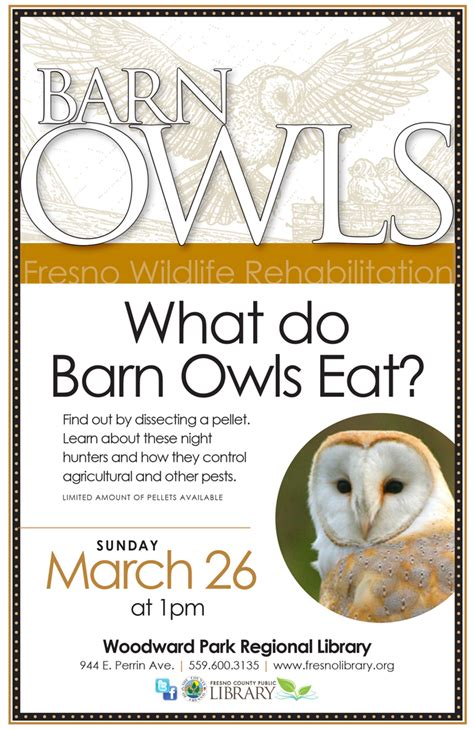 What Do Barn Owls Eat by What Do Barn Owls Eat Friends Of The Fresno County