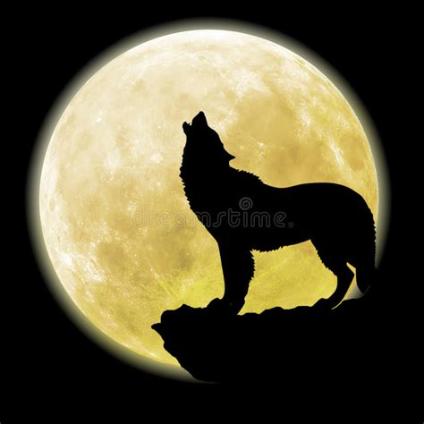 silhouette   wolf  front   moon stock