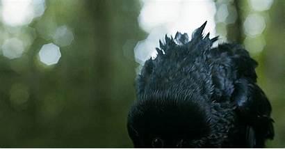 Ravens Thrones Wolves Three Wolf Eyed Raven