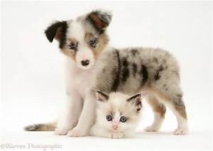 Cute Kittens And Puppies Together Retarded Cat Dog Cats ...