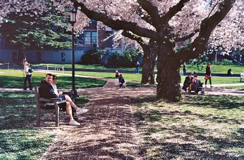 Fileuniversity Of Washington Quad Cherry Blossoms 2012jpg. Icon Central Laboratories Social Security Gpo. Vmware Data Recovery Appliance Download. Website Builder Shopping Cart. Buisness Card Printing Panasonic Phone System. Tips On Christmas Tree Decorating. Car Rental Edinburgh Scotland. Current New Zealand Time Spanish Shows Online. Online Bible Study Lessons Campaign Yard Sign