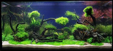 adrie baumann und das aquascaping wasserpflanzen
