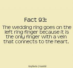 Something Borrowed...: Fun Fact Friday!