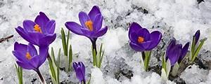 Blumen Im Winter : blumen peters gartenpflege im winter ~ Eleganceandgraceweddings.com Haus und Dekorationen