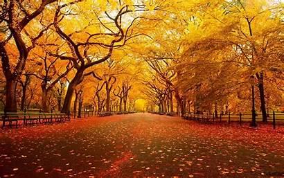 Autumn Fall Trees Foliage November Orange Nature