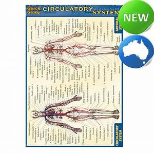 Ln  Circulatory System  Quickstudy  By Inc  Barcharts For