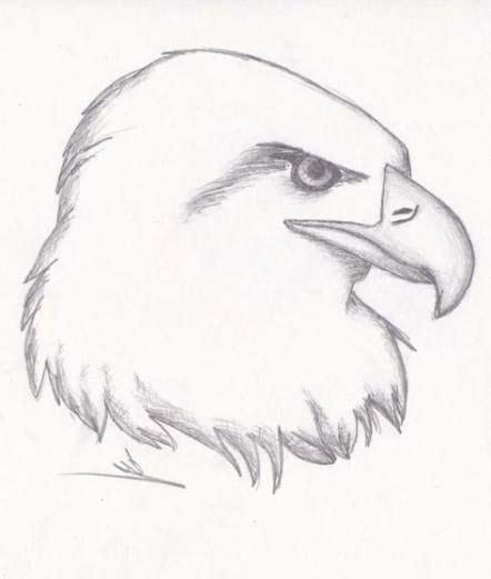 Bird Drawing Cute Animals
