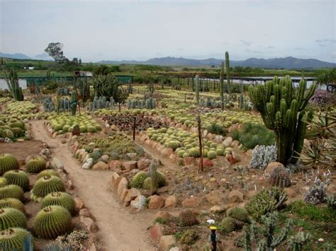 succulent gardens south africa prickly palace home