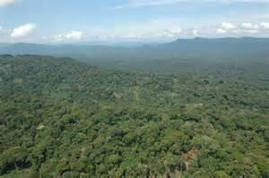 Africa Congo Jungle