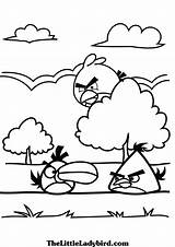 Angry Birds Colorir Colorear Coloring Desenhos Dibujos Pintar Ausmalbilder Kolorowanki Bird Nature Printable Druku Drucken Kinder Beste Sie Disney Procurando sketch template