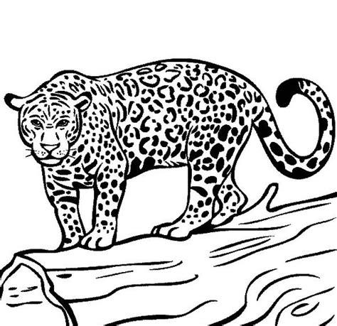 Coloring Jaguar by Jaguar Coloring Page Hd Drawing Board Weekly