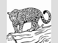 jaguar coloring page hd Drawing Board Weekly