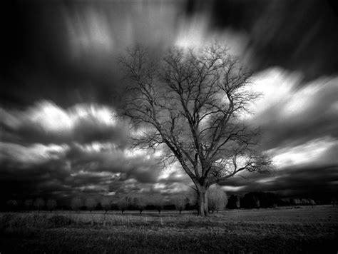 Home Tree Infrared By Michilauke On Deviantart