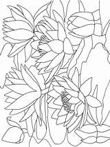 Coloring Lily Pages Water Calla Flower Printable Flowers Print Getcolorings Recommended Colors Mycoloring sketch template
