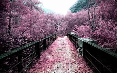 Cherry Blossom Blossoms Wallpapers Bridge Wallpapersafari Code
