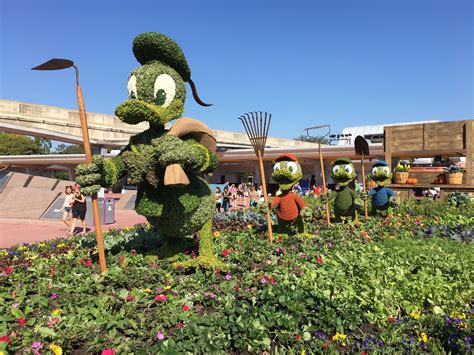 epcot s annual flower now underway orlando sentinel