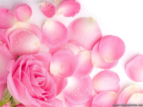 light pink flowers light pink flower wallpapers wallpaper cave