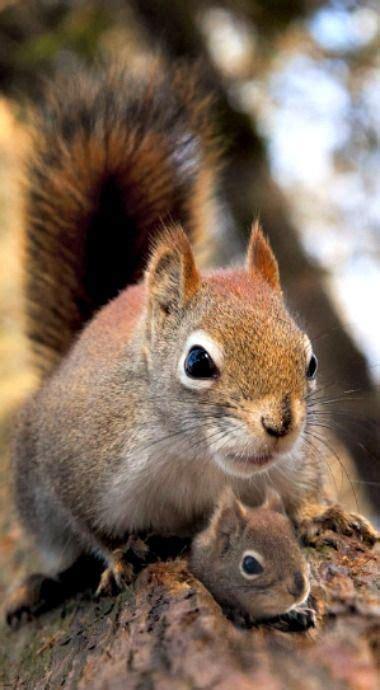 squirrel  cutest baby luvbat