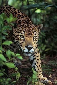 Corcovado National Park, Osa Peninsula, Costa Rica: a ...
