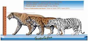 Tiger Subspecies Comparison | www.pixshark.com - Images ...