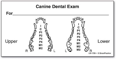 exam labels smartpractice veterinary
