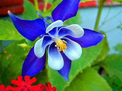 Orchid Flower Flowers Wallpapers Orchids Nature Desktop