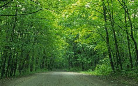 Green Tree Hd Wallpaper by Green Forest Trees Wallpaper