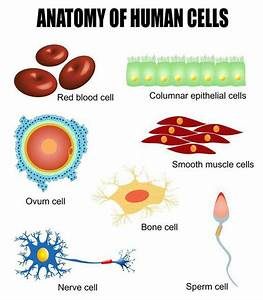 Cell Biology  Lesson 0475