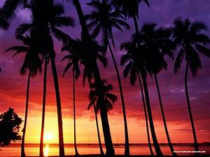 Sunset with Palm Trees # 7 (1600×1200) | Studybooks