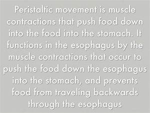 Esophagus And Stomach By Aubrey Sims