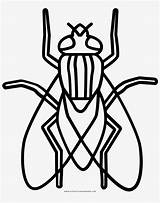 Colorear Mosca Insects Dibujo Lines Pintar sketch template