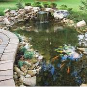 Japanese Ponds Could Provide Inspiration For Any Backyard Pond Large Backyard Pond Designs Backyard Ponds Construction Of A 67 Cool Backyard Pond Design Ideas DigsDigs Garden Pond Ideas Landscaping Gardening Ideas