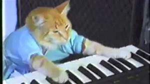 Funniest cat videos ever compilation! - YouTube