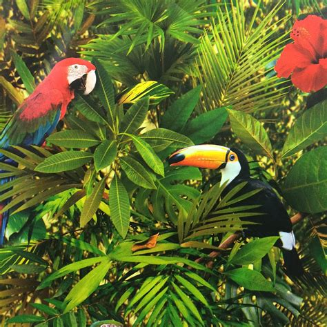muriva tropical jungle wallpaper 102555
