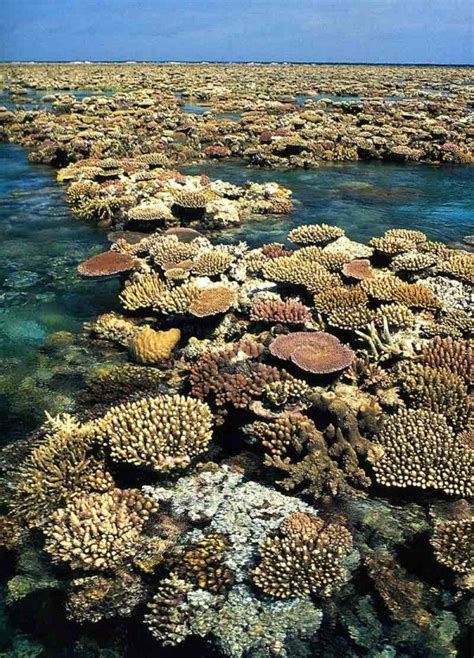 25+ Best Ideas About Great Barrier Reef Diving On