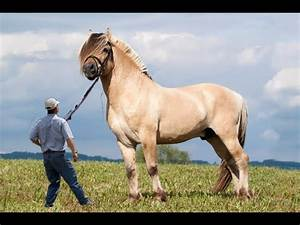 Top 10 Biggest Horse - Work Horse Breeds in the World ...