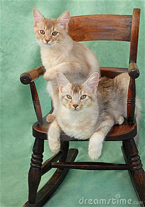 cats  rocking chair royalty  stock image image