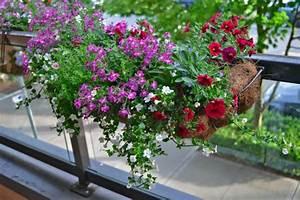 Plantes Et Fleurs Pour Balcon : comment avoir un balcon fleuri id es en 50 photos ~ Premium-room.com Idées de Décoration