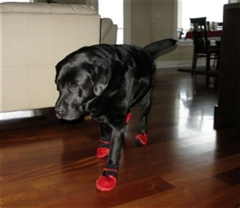 shoes for dogs on hardwood floors own a dog and are worried about him destroying your new hardwood floors the pet product guru