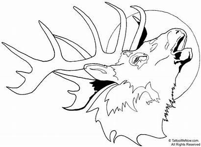 Deer Coloring Pages Head Printable Wild Animal